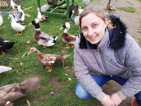 Confinement des oiseaux suite à la grippe aviaire