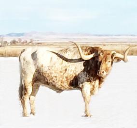 """Bobbi Bennett """"Lucky Bull""""$4500"""