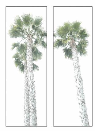 "Bobbi Bennett ""Sexy Palms"" 20 x 50 inches $6500"