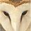 Thumbnail: Birds Of Prey