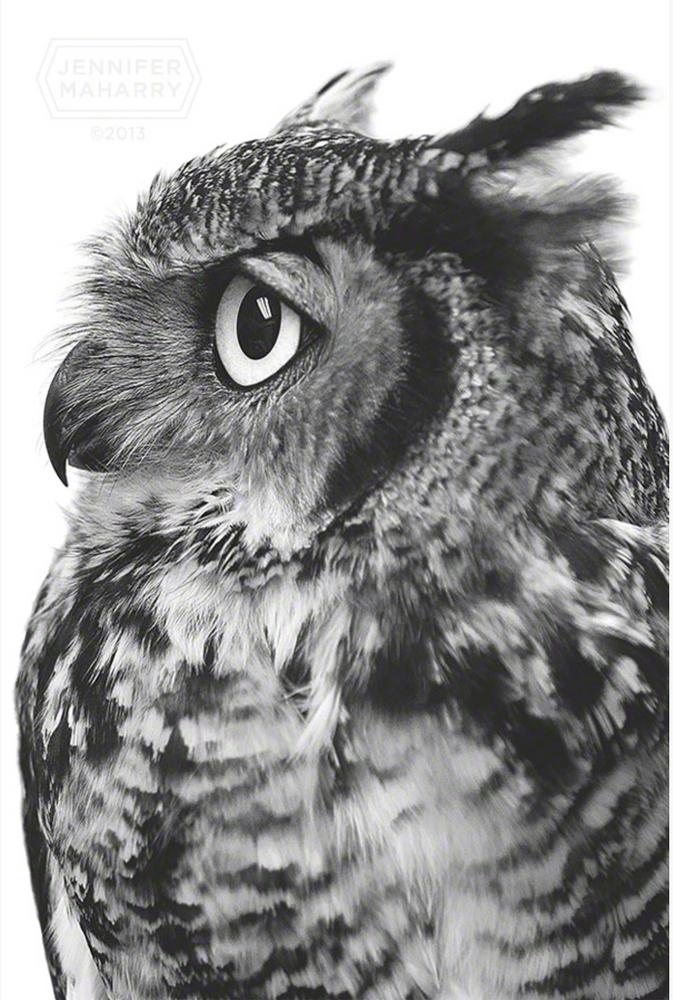 JM Great Horned Owl.png