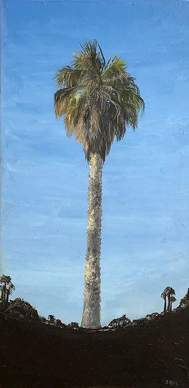 Malibu Palm
