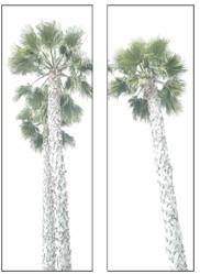 palm dypdic