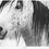 Thumbnail: Wild Horses