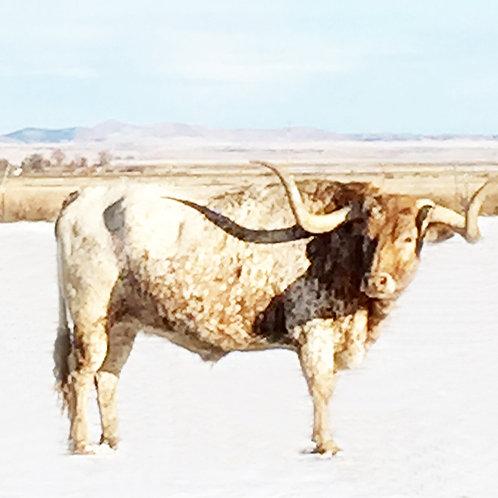 lucky bull