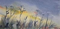 original watercolour, impression of seedheads against a dark sky