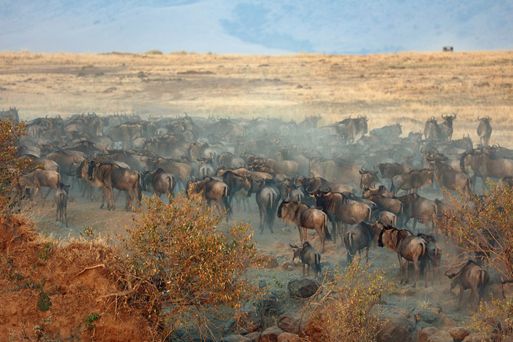 Multitude animale