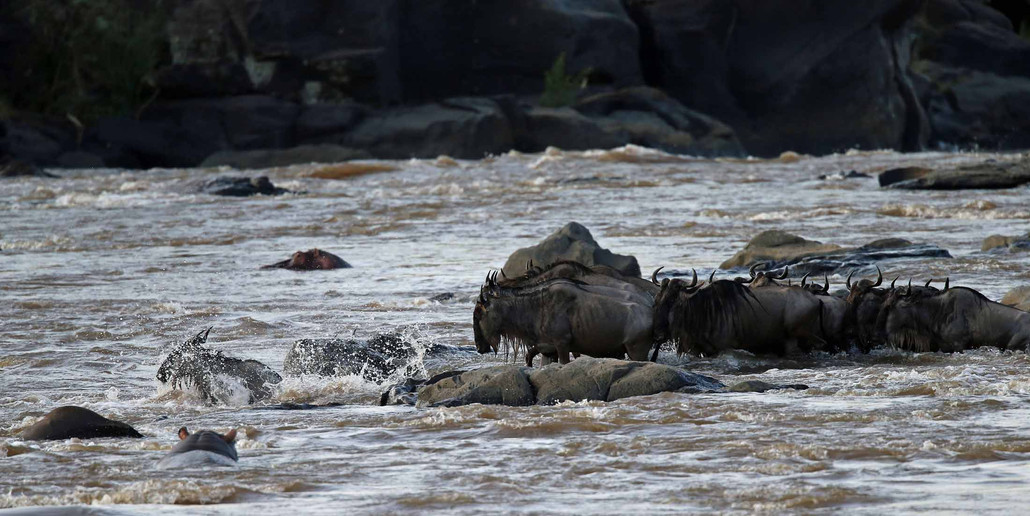 A quelques centaines de mètres, une autre vague de migrants tente une traversée dans un endroit où le courant plus fort dissuade les crocodiles.   Toutefois, les rochers glissants qui encombrent ce passage vont rendre la tâche beaucoup plus difficile.