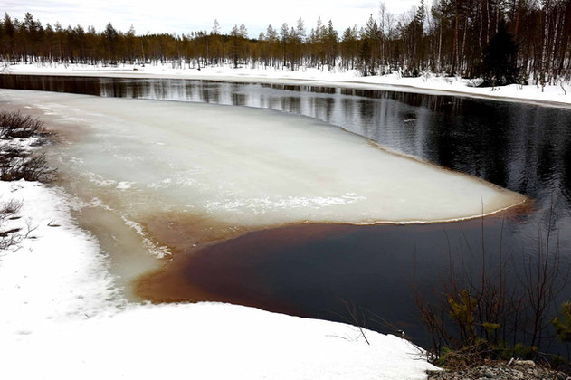 Le fond de la rivière chargé de débris végétaux en décomposition a pris une teinte brunâtre. Cette couleur disparaitra lorsque le courant libéré reprendra sa course.