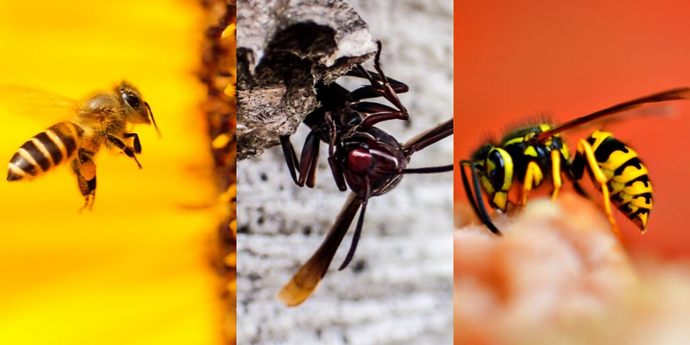 bee, hornet and wasp