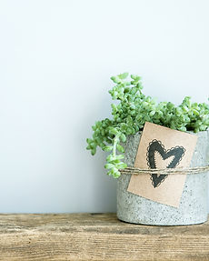 succulent in concrete pot. Gift tag with