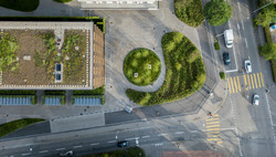 woodroofing_greenroof_02