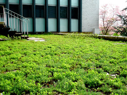woodroofing_greenroof_04