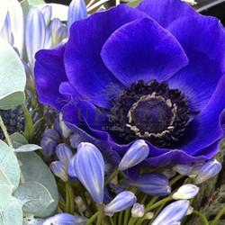 bluemilia_fiori_blu.jpg
