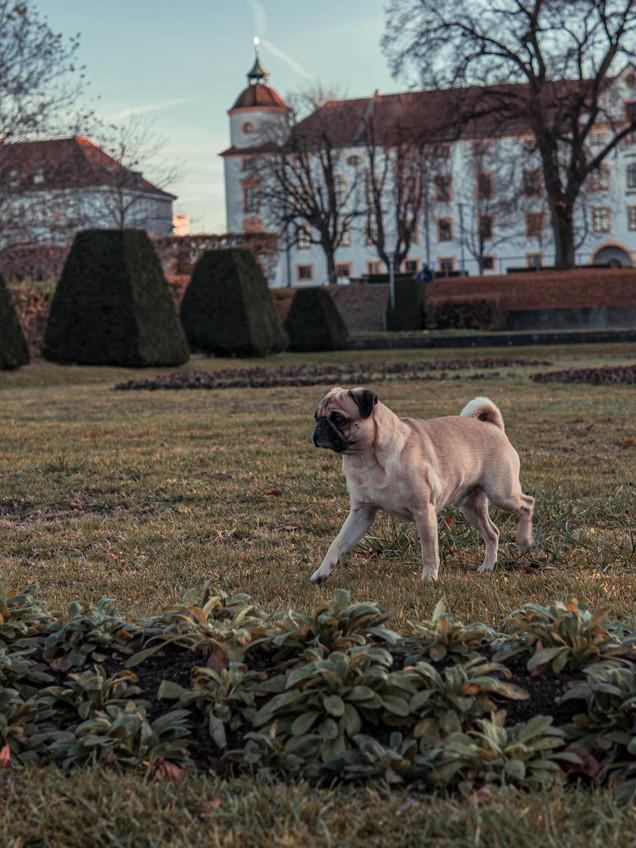 Hundfotograf Kempten