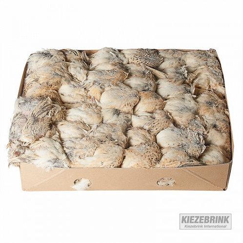 Kiezebrink - Whole Quail