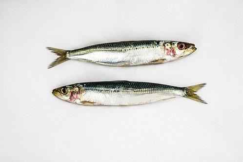 Sardines - 1kg