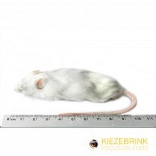 Jumbo Mouse - Singles