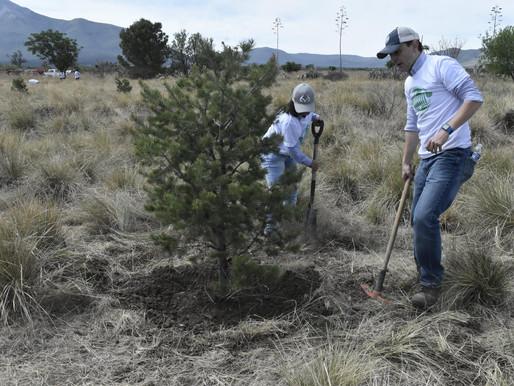 Protección y Mantenimiento de Área Verde, FCA Saltillo, Coahuila, 2019.
