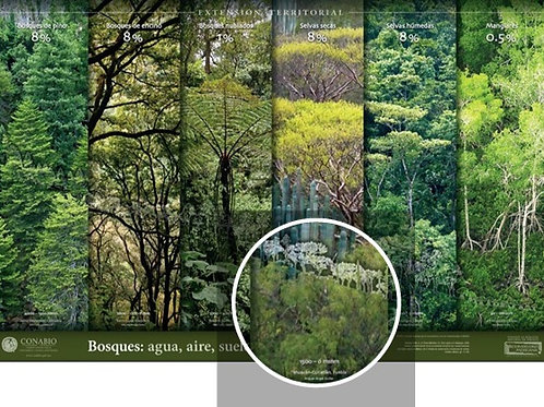 Bosques: agua, aire, suelos, fuego…vida