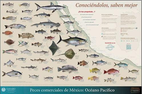Peces comerciales de México: Océano Pacífico