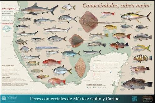 Peces comerciales de México: Golfo y Caribe