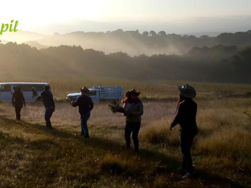Reforestación Querétaro Ejido Jacal de la Piedad, 2018.