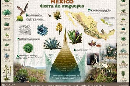 México: tierra de magueyes