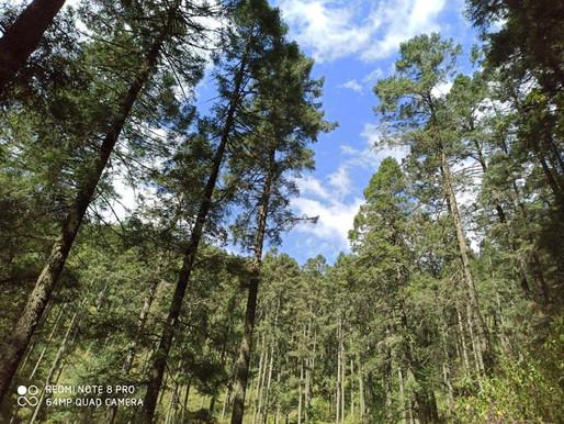 Nuestros bosques, la mejor manera de disminuir el calentamiento global.