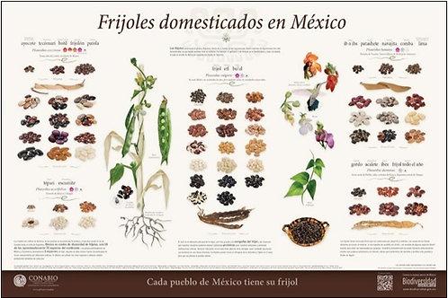Frijoles domesticados en México