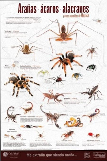 Arañas, ácaros, alacranes y otros arácnidos de México