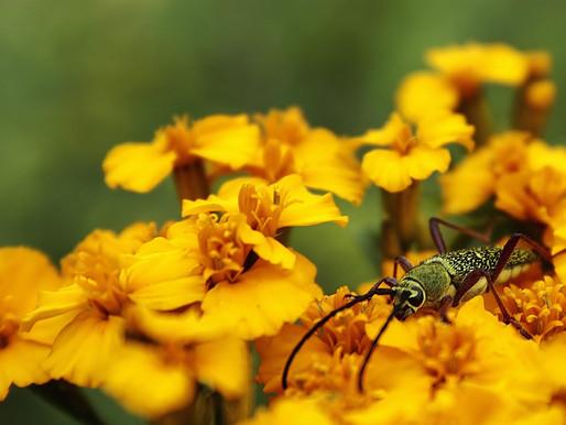 """Primer concurso de Fotografía """"La Biodiversidad esta en la mesa"""" 2011."""