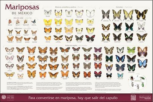 Mariposas de México