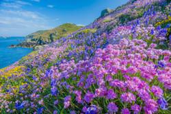 Spring/Summer flowers