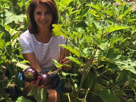 Aubergines Fresh from the Garden