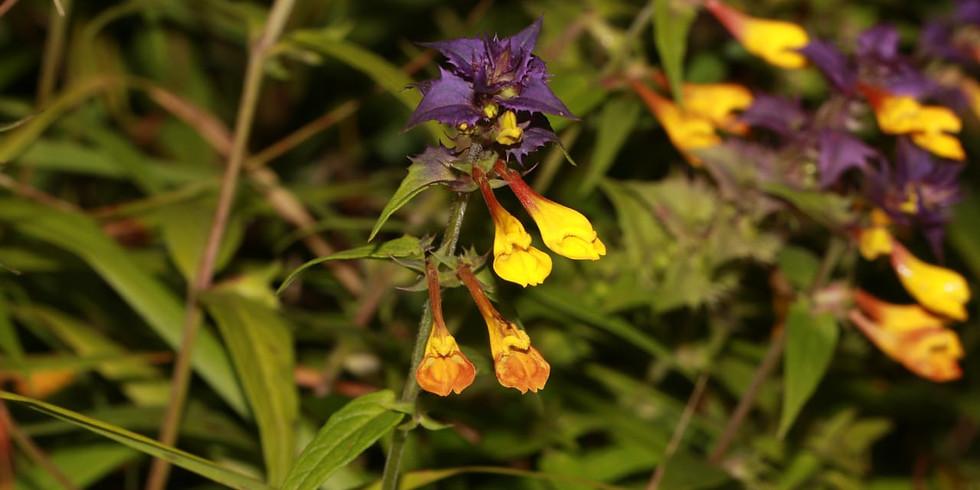 Ботаника в Битцевском лесу (0+)