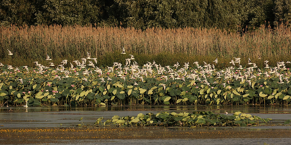 Осенняя миграция птиц в Астраханском заповеднике (15-18 октября)