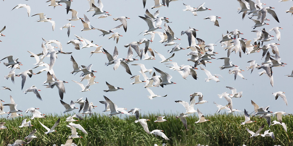 Осенняя миграция птиц в Астраханском заповеднике (10-13 октября)