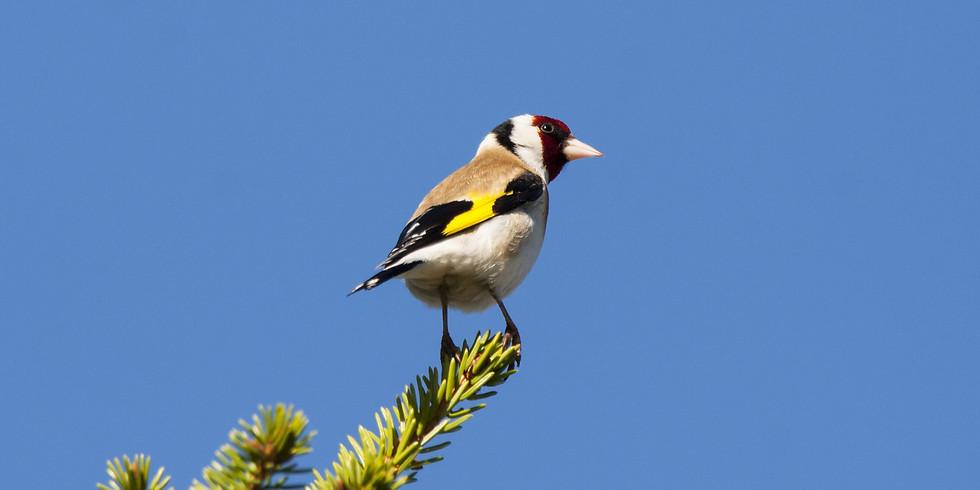 Птицы Измайловского парка