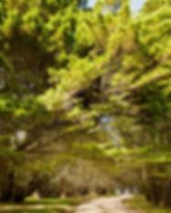 Bundanoon-tree-path.jpg