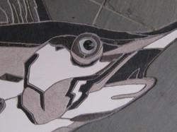 Swordfish up close detail