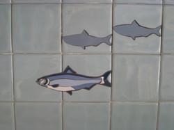 blue herrings