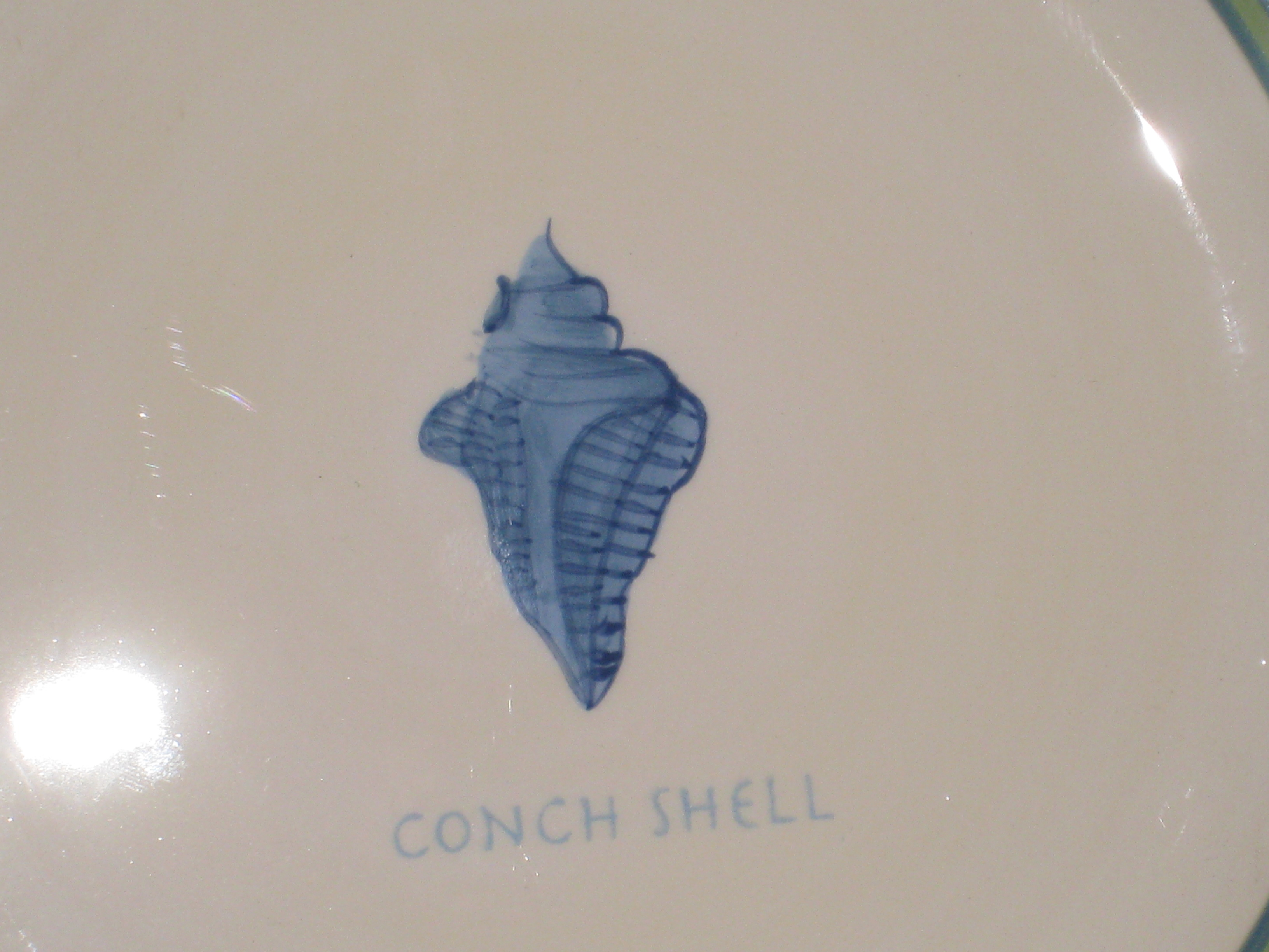 Reference Image of Conch