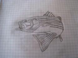 Striper - Orignal Sketch