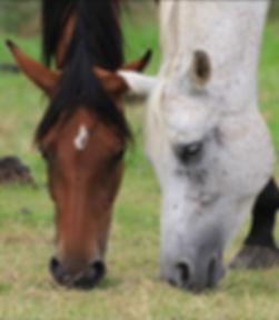 2 chevaux.jpg