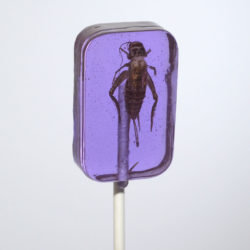 hot lix cricket sucker