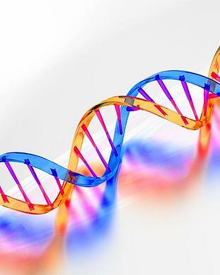 ДНК 1.png