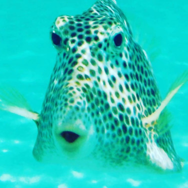 Did we mention the snorkeling is unbelievable?