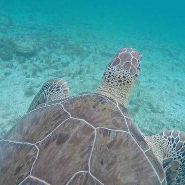 Swim with sea turtles right outside!