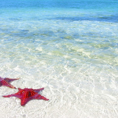 Starfish point is two minutes away!